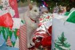 Tiberius_Christmas_2020.jpg